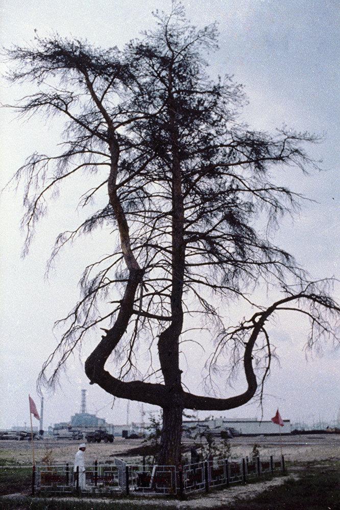 Drevo-krest